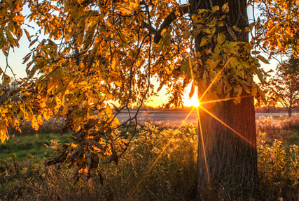 Wisconsin sunset through Hickory Tree